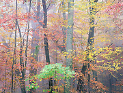 Blue Ridge Autumn Forest, North Carolina