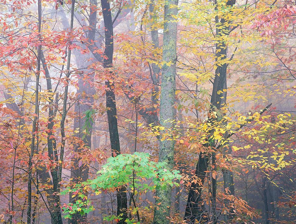 Blue Ridge autumn forest North Carolina