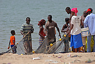 fishermen hauling beach seine net, with catch of small fish such as sardines and sardinella, M'bour, Senegal