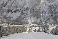 24.11.2008.Chamois (Rupicapra rupicapra) in alpine landscape with European Larch (Larix decidua)..Gran Paradiso National Park, Italy