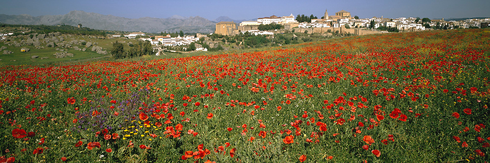 SPAIN, ANDALUSIA Fields of poppies and wildflowers near Ronda