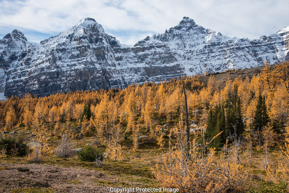 Larch Valley., Alberta, Canada, Isobel Springett