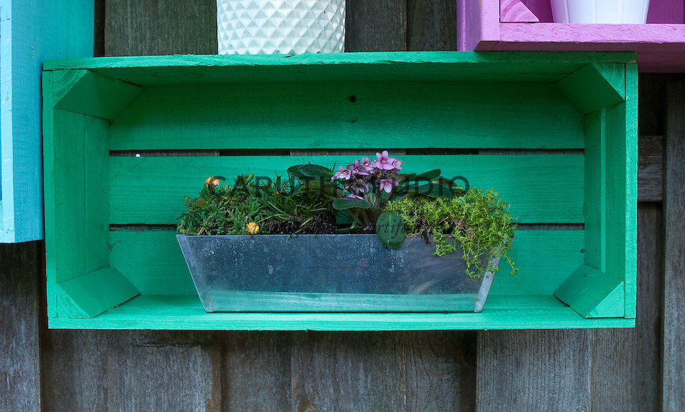 Ground cover plants in a metal spackle pan displayed in a green painted wood crate