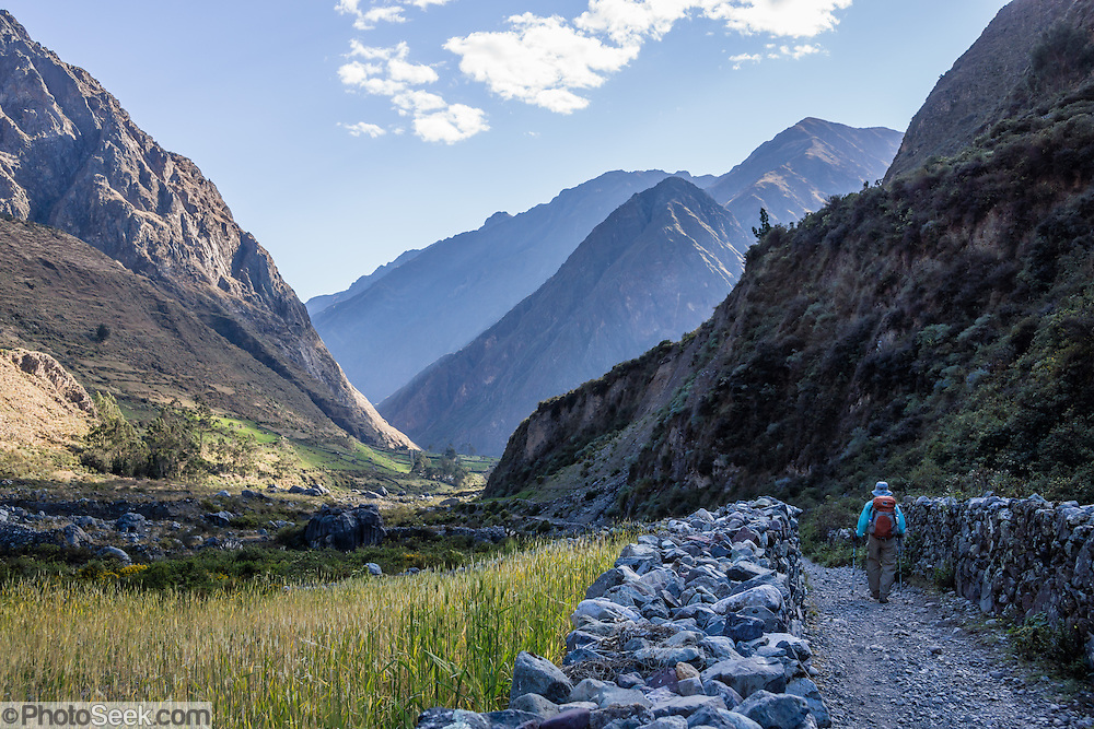 Hiker, crops, Huayllapa Valley. Day 6 of 9 days trekking around the Cordillera Huayhuash in the Andes Mountains, Peru, South America.