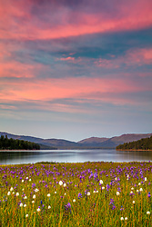 """Sagehen Meadows Sunset 2"" - Photograph of a vibrant sunset above Camas wildflowers and Stampede Reservoir at Sagehen Meadows."