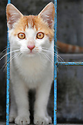 Ginger house cat photographed in India