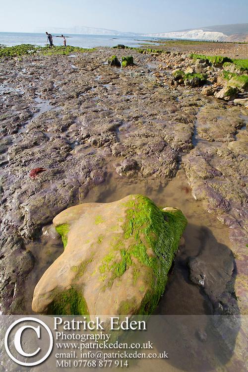wave cut platform, Fossil, Paleontology, Dinosaur, Iguanodon, footprint, Compton Bay, Isle of Wight, England, UK, beach Photographs of the Isle of Wight by photographer Patrick Eden photography photograph canvas canvases