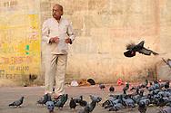 Feeding pigeons at Lal Ghat