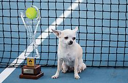 Doubles winner Trophy and a dog during Day 8 at ATP Challenger Zavarovalnica Sava Slovenia Open 2018, on August 10, 2018 in Sports centre, Portoroz/Portorose, Slovenia. Photo by Vid Ponikvar / Sportida