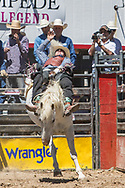 Hunter Brasfield rides Summit Pro Rodeo's 464 Gray Coat in the bareback riding during the first performance at the Elizabeth Stampede on Saturday, June 2, 2018.