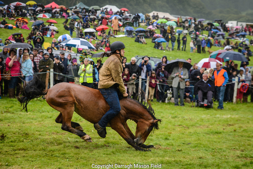 A rider flies struggles to hold on as his pony bucks