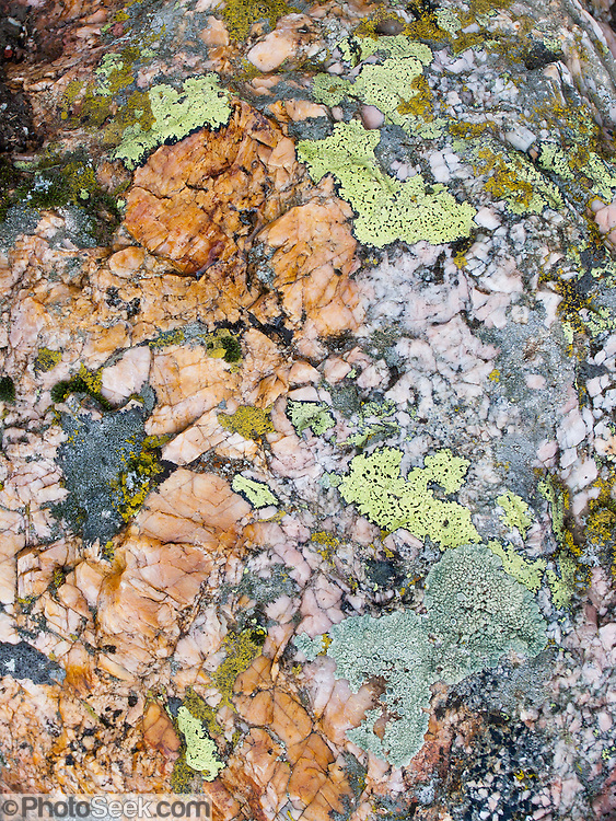 Lichen and rock pattern in Granite Canyon, Grand Teton National Park, Wyoming, USA