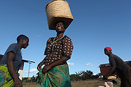 Lead farmer Mary Kamangeni, 52, center, collects sun dried corn from where she's left it out to dry in Tholo, Malawi . As a lead farmer in the community and regularly teaches fellow villagers drought resistant techniques. When Mary first began using dried up corn stalks as a way of retaining water and nourishing her crops many in her community laughed at her, but when they saw the success they now come to her to ask that she teach them the technique. Mary was often hospitalized due to complications of HIV in 2007.  Her weight hovered at around 60 pounds. ARVS and supplementary feeding provided by Doctors Without Borders restored her health and will to live. With her weight at 110 pounds, Mary vowed to work harder than anyone else in her community to provide for her family. The CRS spearheaded WALA program funded by USAID and implemented by 8 partner organizations has helped Mary fulfill her vow. She is a lead farmer in her community and she has seen her crops double and even triple some years. She also participates in Village Savings and Loan projects and cares for livestock provided by WALA partner World Vision.