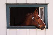 Thoroughbred race horse looking out of window in horse barn, Kentucky Horse Park, Lexington, Kentucky