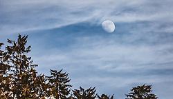 THEMENBILD - der Mond und Nadelbaumspitzen, aufgenommen am 16. Februar 2019 in Maria Alm, Oesterreich // the moon and coniferous peaks, in Maria Alm, Austria on 2019/02/16. EXPA Pictures © 2019, PhotoCredit: EXPA/Stefanie Oberhauser