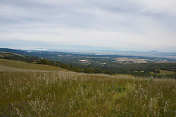 Field of grass and wildflowers overlooking Palo Alto and the San Francisco Bay, Russian Ridge Open Space hiking trails, Palo Alto, California, United States of America.