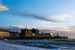 ©Licensed to London News Pictures. 17/03/2019. Aberystwyth UK. Tens of thousands of starlings perform their nightly balletic murmurations in the sky above Aberystwyth as the day draws to an end. Aberystwyth is one of the few urban roosts in the country and draws people from all over the UK to witness the spectacular nightly displays between October and March. Photo credit Keith Morris/LNP