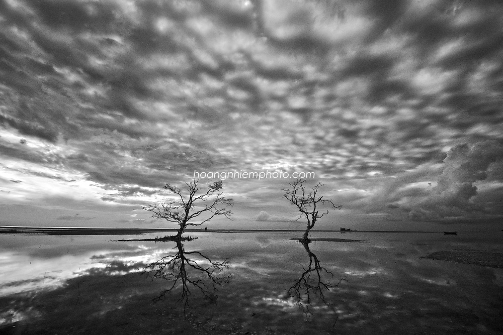Vietnam Images-Fine art B&W- Tree-Phu quoc island. hoàng thế nhiệm