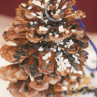 A pine cone bird feeder is pictured Saturday December 20, 2014 during Nature Holiday Creations at Halyburton Park in Wilmington, N.C. (Jason A. Frizzelle)