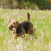The photography was made at the Randy Cooley Memorial Hunt Test, which was held May 16-17, 2015,  at Rock River Kennels in Beaver Dam, WI.