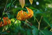 Wild Mountain Plants
