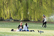 © Licensed to London News Pictures. 19/03/2014. London, UK People enjoy the sunshine at Regents Park today 19th March 2014. Photo credit : Stephen Simpson/LNP