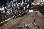 A fisheries staffer lines up blue marlin fish on the cracked concrete floor of the fish market at Shiogama city, Miyagi Prefecture, Japan on 28 May, 2011. The market, which was damaged by the March 11 magnitude quake and subsequent tsunamis, reopened for business in early May. Photographer: Robert Gilhooly