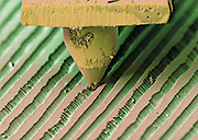 Needle playing a record. Colored scanning electron micrograph (SEM) of the needle (stylus) of a record player in a groove on a record. A record is used to store sound. It is produced by a machine with a head which vibrates in time to the sound being recorded. This cuts a groove in the record which varies according to the vibrations. A needle can then reproduce these vibrations as it runs along the groove and these, when amplified, produce the original sound.  This is a stereo record.  The needle in contact with the record is a LP needle, or a long play needle designed for stero use.  Magnification is 135x when printed 10 cm wide