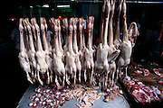 Ducks for sale in the old Qingping market, Guangzhou, China. (From a photographic gallery of meat and poultry images, in Hungry Planet: What the World Eats, p. 164). Although meat in the United States and Europe mainly comes from factory farms and is sold in shrink-wrapped packages, most animal products elsewhere (as these photographs demonstrate) come from small-scale producers and are sold by butchers.