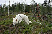 blodspor, trening, ved Østrungen. Kari krogstad med sin unge hund av typen hvit gjeterhund.