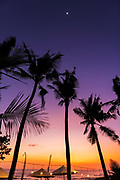 Silhouetted palms at sunset, Seseh Beach, Bali, Indonesia