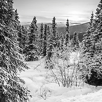Alaska's winter landscape