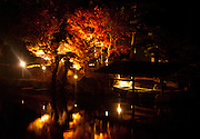 Maple Leaves lit up at night over a lake, with a  boat sheltered under a hut behind, taken in Nagoya, Japan.