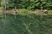 Fallen trees on bottom of Killarney Lake<br />Killarney Provincial Park<br />Ontario<br />Canada