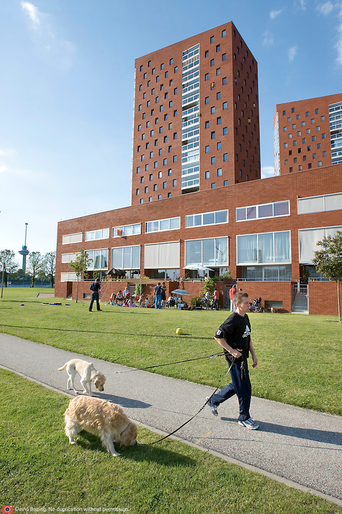 "Nederland Rotterdam 30-05-2009 20090530 Foto: David Rozing ..Nieuwbouw woningen in probleemwijk Katendrecht, man laat honden uit  met op de achtergrond de nieuwbouw woningen en euromast. Stedelijke vernieuwing,  lekker weer, huisje boompje beestje, ruime moderne wijk, vrij uitzicht, strand New houses / appartments in (former) deprived area / projects ""Katendrecht "" This area is on a list with projects which need help of the government because of degradation in the area etc   ., project, suburb, suburbian, problem. Neighboorhood, neighboorhoods, district, city, problems,  daily life Holland, The Netherlands, dutch, Pays Bas, Europe ..Foto: David Rozing"