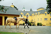 Ireland, Kenmare, County Kerry, Sheen Falls Lodge, man with horse