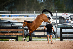 SUI, Bianca<br /> World Equestrian Games - Tryon 2018<br /> © Hippo Foto - Sharon Vandeput<br /> 15/09/2018