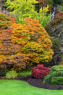 Fall maple foliage at Queen Elizabeth Park in Vancouver, British Columbia, Canada