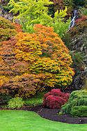 Fall maple foliage at Queen Elizabeth Park in Vancouver, British Columbia, Canada