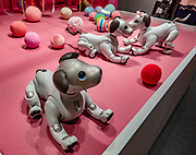 "Shown here in a Sony Showroom in Ginza, Sony Aibo model ERS-1000 robotic dog was launched in January 2018 (as the fourth generation of AIBO models which were first introduced to consumers in 1999). Sony's AIBO (or aibo, Artificial Intelligence Robot, homonymous with aibō, ""pal"" or ""partner"" in Japanese) is a series of robotic pets. It requires an always-on internet connection to function fully and comes with an LTE SIM card and monthly subscription service to support interaction and learning in the cloud."