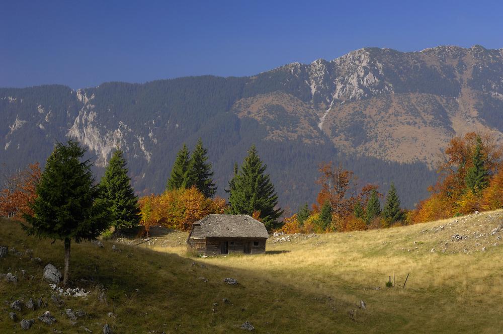 Alpine meadow and Piatra Craiului Mountains, Piatra Craiului National Park, Transylvania, Southern Carpathians, Romania