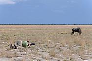 Impressionen aus dem Liuwa Plain Nationalpark in Sambia mit Fotografen am Werk mit einem Gnubullen.