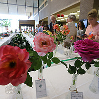 Over 100 hundred roses fill the lobby of renasant bank in downtown Tupelo on thursday as part of the annual Northeast Mississippi Rose Society Rose Show.