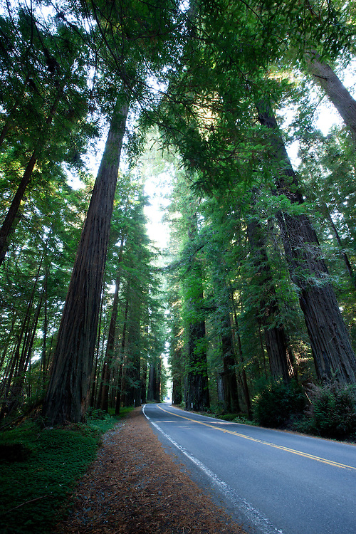 Avenue of the Giants in Humbolt Redwoods State Park, California