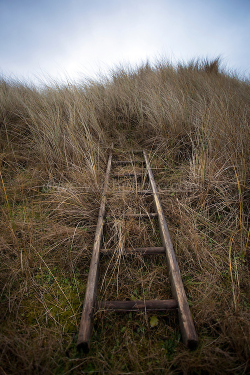 Abandoned ladder in the Marram Grass, north end of Bull Island, Dublin, 7 February 2010.<br />