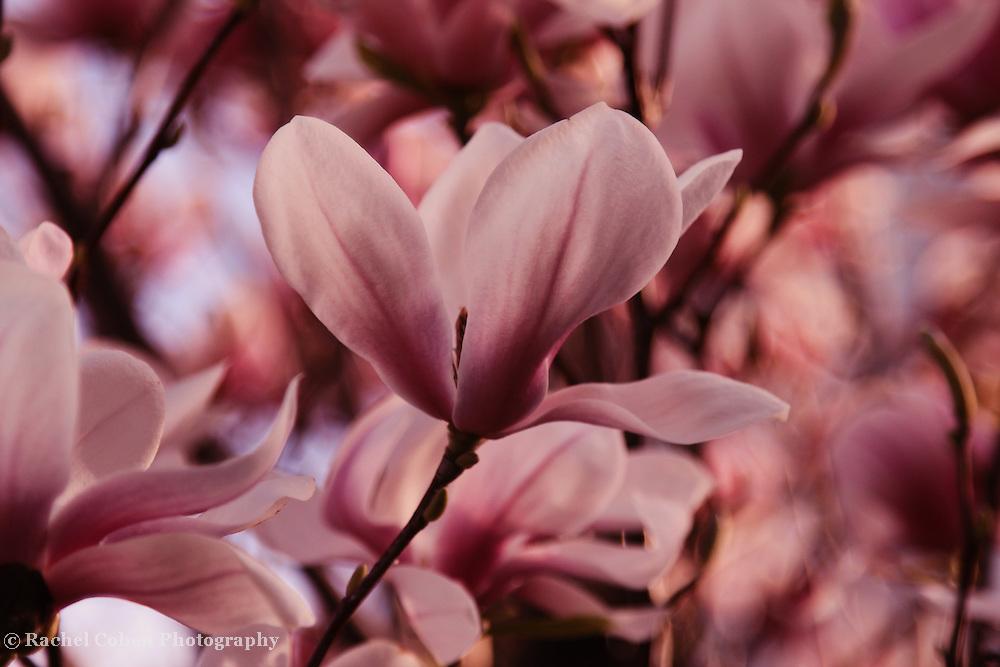 &quot;Free Form&quot;<br /> <br /> Flowers by Rachel Cohen