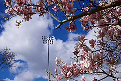 LONDON, ENGLAND - Sunday, March 17, 2019: Cherry blossom blooms outside Craven Cottage before the FA Premier League match between Fulham FC and Liverpool FC. (Pic by David Rawcliffe/Propaganda)