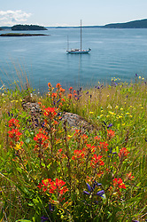 Wildflowers of Yellow Island, San Juan Islands, Washington, US