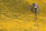 Old windmill against hillside covered in Goldfields, Temblor Range, Carrizo Plain National Monument, California