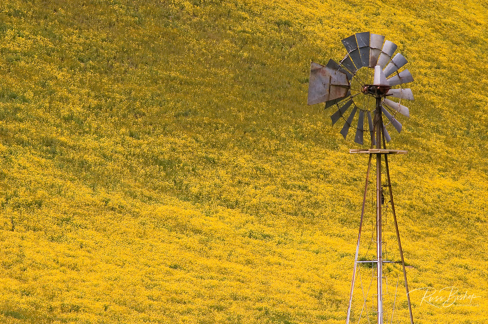 Old windmill against hillside covered in Goldfields, Temblor Range, Carrizo Plain National Monument, California